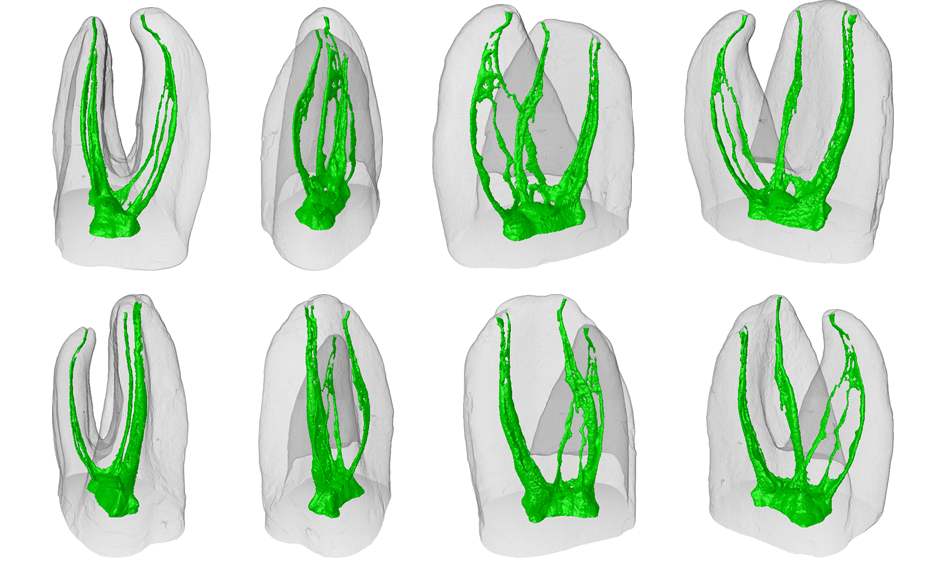 Scripps Mesa Endodontics Scripps Mesa Endodontics
